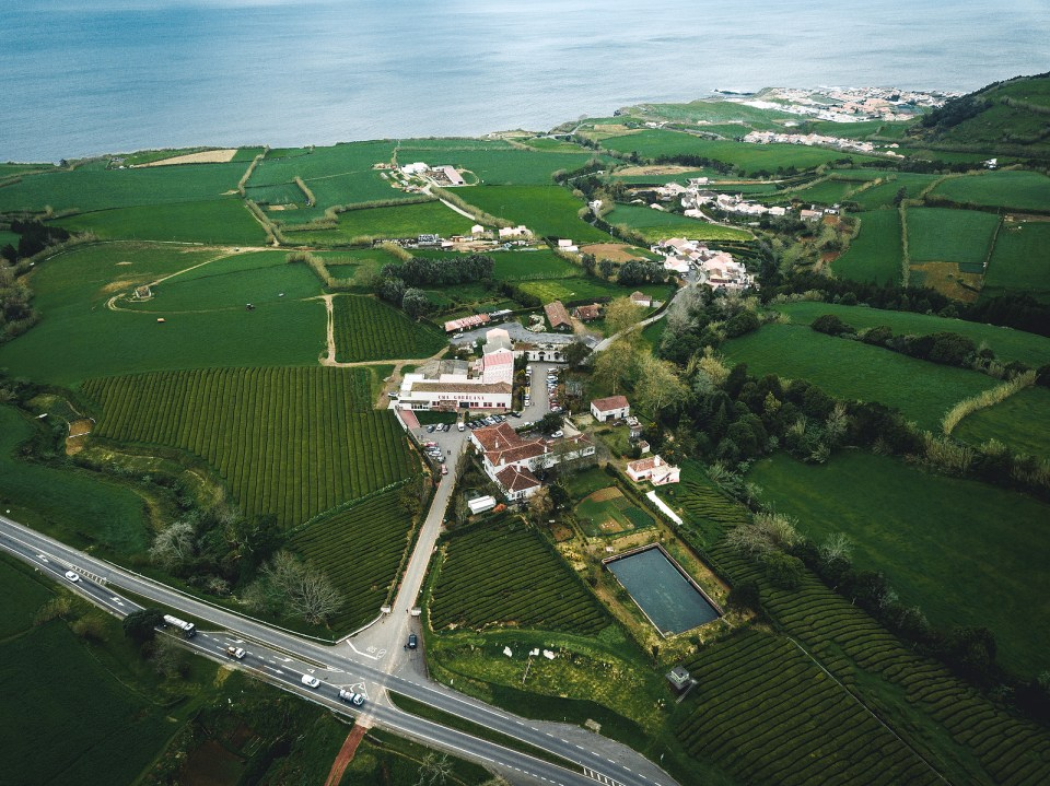 azores tea plantation portugal