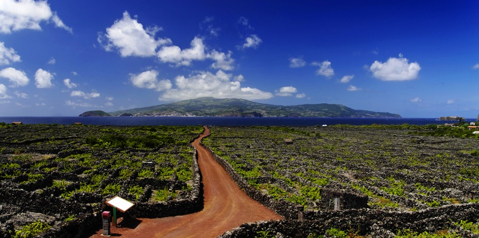 Red Volcanic Lava Stone Trail Among Vineyard. Azores on Pico Island Wine