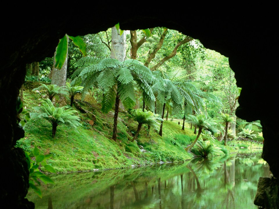 Fern Trees and River in the Azores Sao Miguel