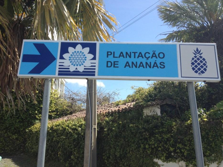 Plantacao de ananas dos acores Sao Miguel Island Pineapples