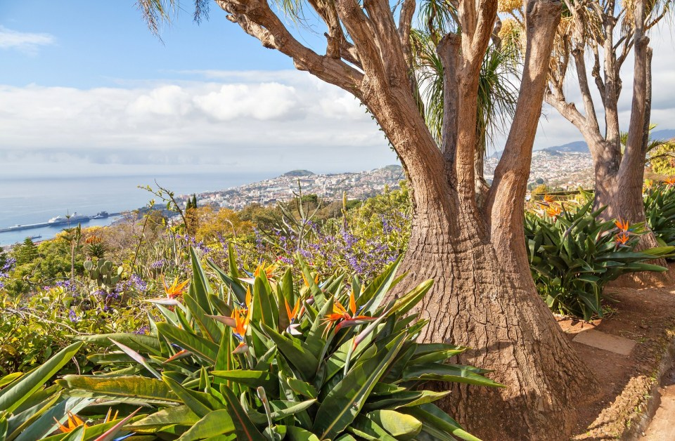 Madeira Island Tree Macaronesia Islands Flowers