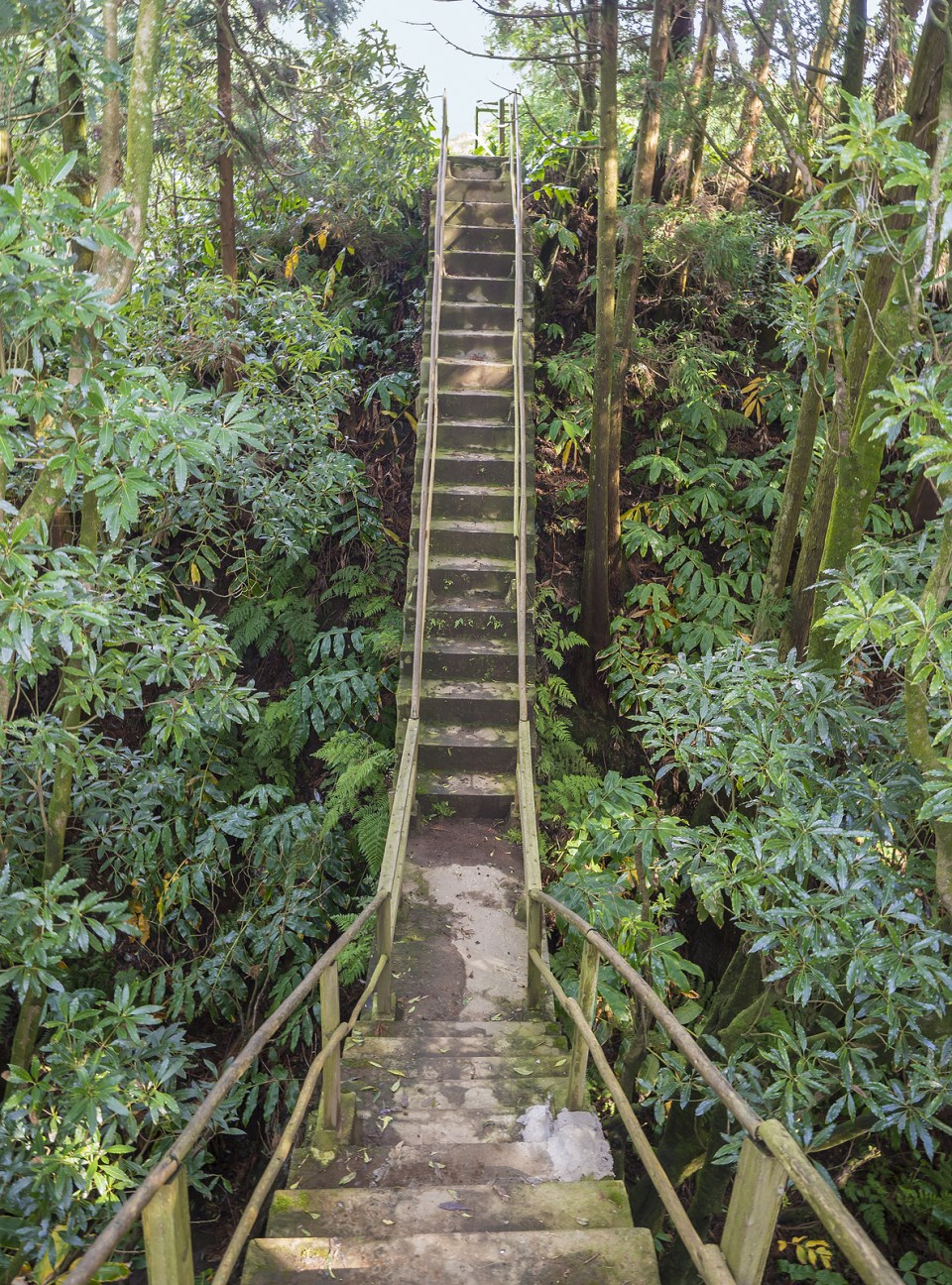 sao miguel nature reserve rain forest