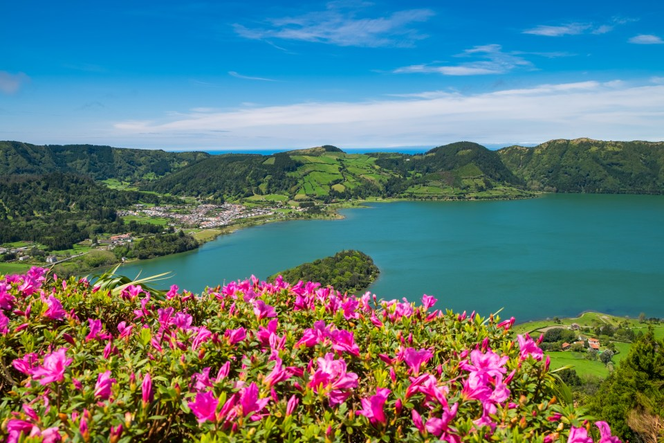 flowers and lake lagoa do fogo on Azores Islands