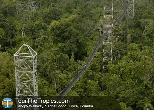 Sacha Lodge Canopy Walkway - Atracciones en Ecuador