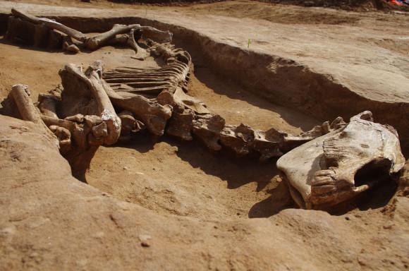 Copyright : Metz Métropole_Pôle archéologie préventive