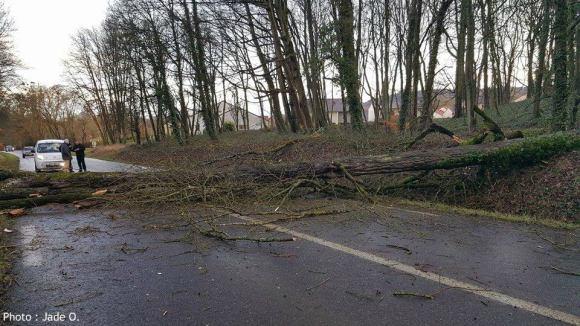 arbre tombe vent violent tempete 980