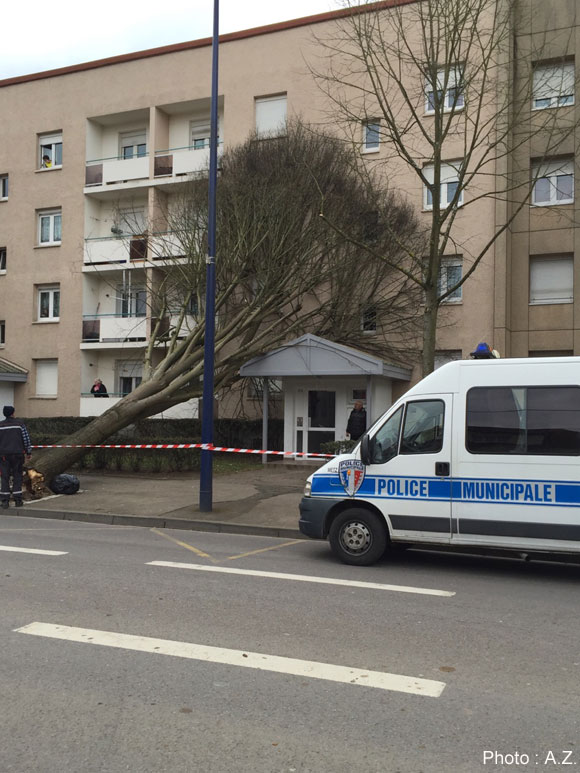 Un arbre s'est écrasé sur la façade d'un immeuble Avenue André Malraux à Metz