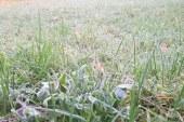 Lorraine : pic de froid et températures négatives