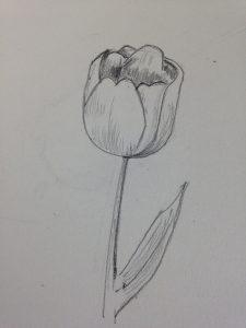 Comment Dessiner Une Tulipe Realiste En 3 Etapes Art Express
