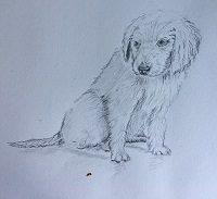 Apprendre à dessiner ce petit chien en 4 étapes faciles