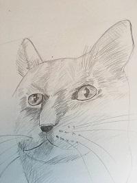 Comment faire un portrait de chat rapidement.