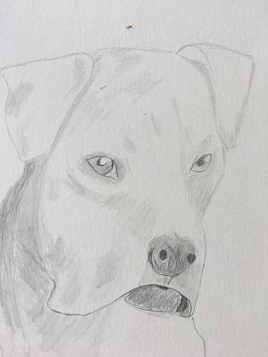 Comment faire le portrait d'un chien rapidement…(1)