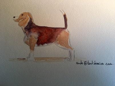 Comment peindre un chien rapidement à l'aquarelle