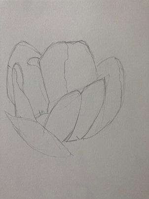 La forme générale de la fleur