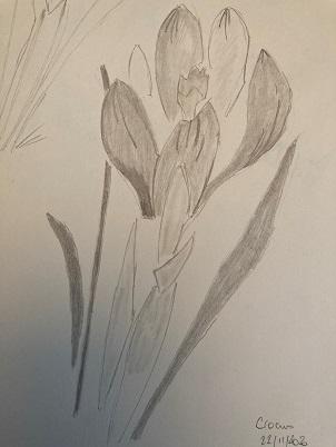 Rendu final de la fleur de crocus