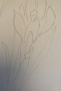 Le feuillage de la fleur