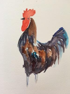 Un coq à l'aquarelle