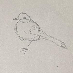 Comment dessiner  un oiseau facilement.