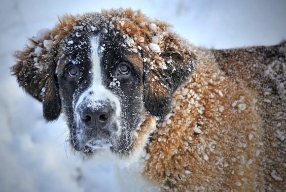 Comment protéger son chien du froid pendant l'hiver ?