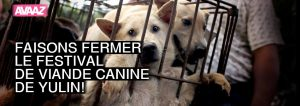 campaign_yulin_dogs