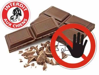 Pâques : le chocolat est strictement interdit aux chiens !