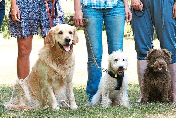 Cours canins supprimés: faut-il crier au loup?