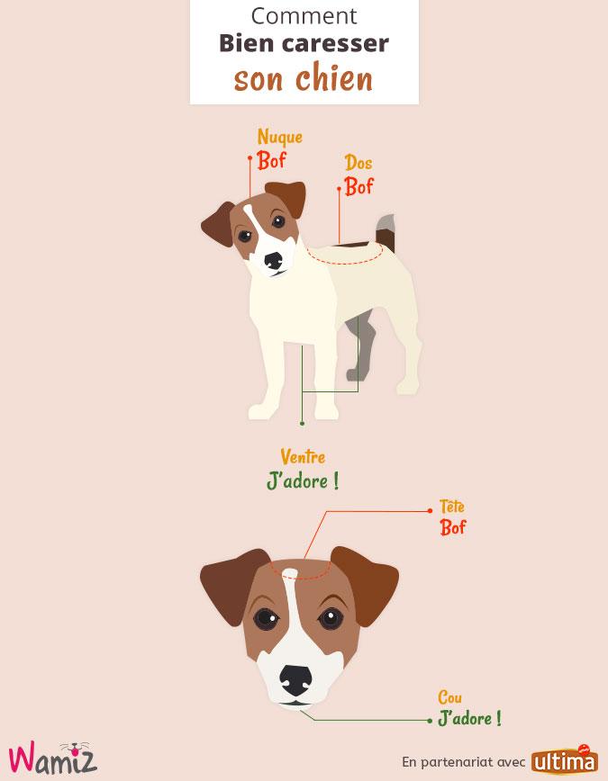 bien-caresser-son-chien