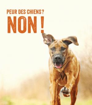 Peur des chiens? Non!