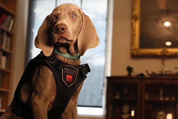 Profession: chien sniffeur d'oeuvres d'art