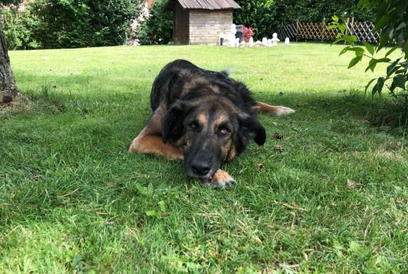 10 trucs pour que votre chien ne souffre pas d'un coup de chaleur cet été