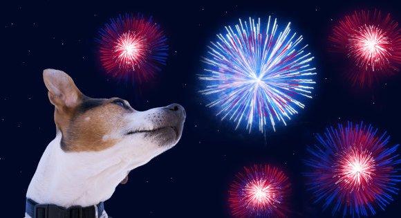 Que faire ce 1er août si votre chien a peur des feux d'artifice