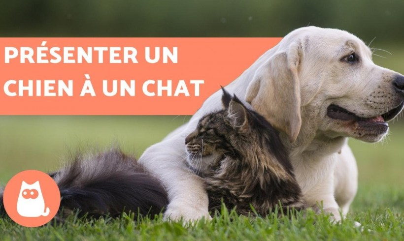Comment présenter un chien et un chat ?