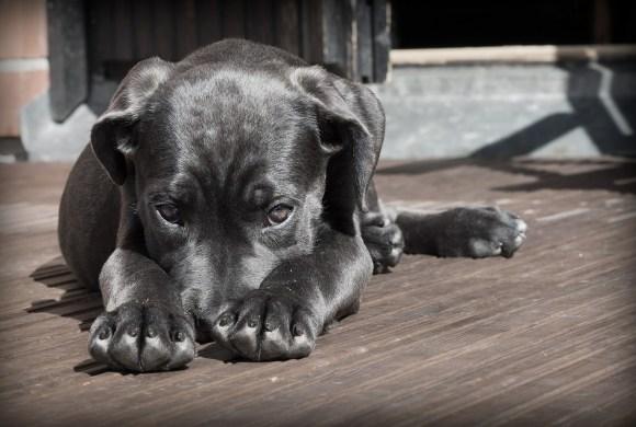 Quand vous êtes stressé, votre chien l'est aussi !