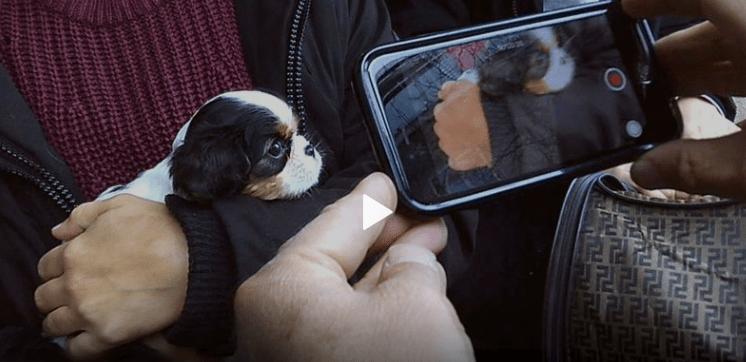 Mon chien sur internet, enquête sur un sale trafic