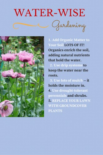 Water-wise-gardens-how-to