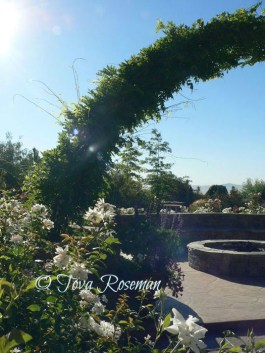 design your garden with a view