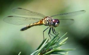 spring-garden-dragonfly