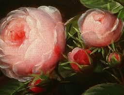 dutch-cabbage-roses