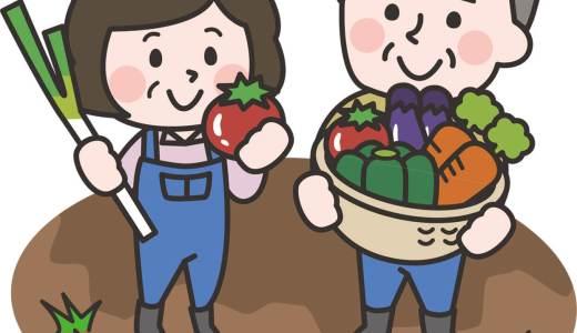 株も蕪も育てています:畑仕事の問わず語り