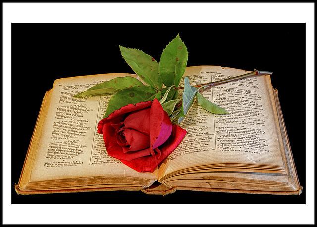 Why do I Read Peace Poems