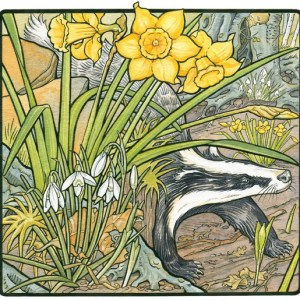 daffodils-with-badger
