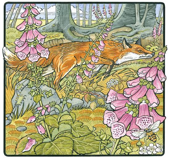 foxgloves-with-fox