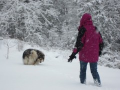 December 2013 Snow 016
