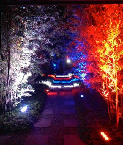 lighted tree down path for event