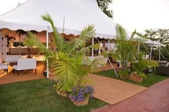 Havana-Palm-Tree-Prop-Rentals2