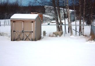 Polar Bears greet us