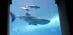 Whalesharkdubai