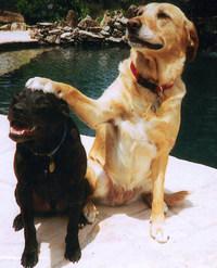 Dogfriends1