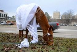 Horse-bride