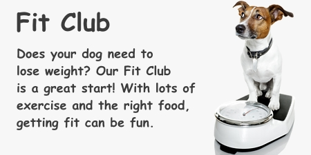 Help your dog get fit at doggie camp.